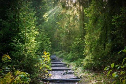 Droga do nawrócenia - konferencja duchowości - piątek 15.02.2019 godz. 20.00